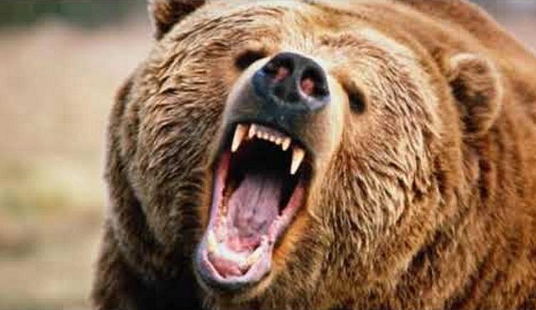 Коготь медведя. Значение древнеславянского оберега