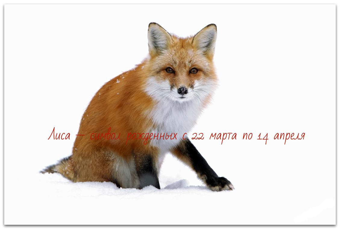 чертог лисы, значение знака