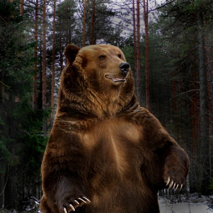 Медведь - тотемное животное славян