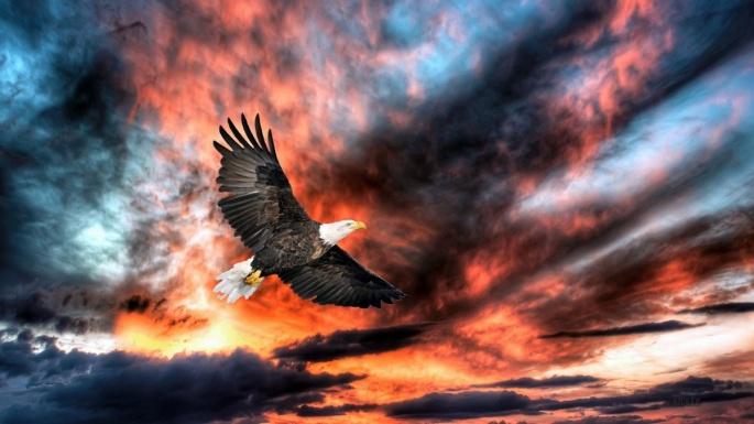 Наступающий 2019 год — это год парящего орла по славянскому календарю