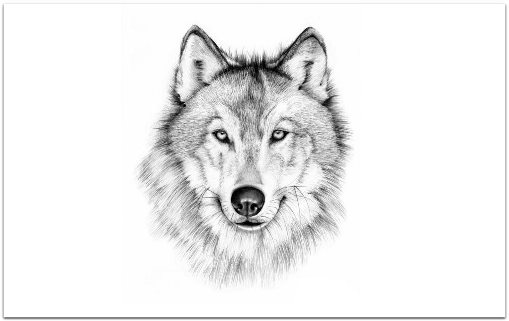 волк - тотемное животное