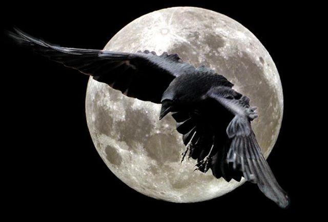 чертог ворона