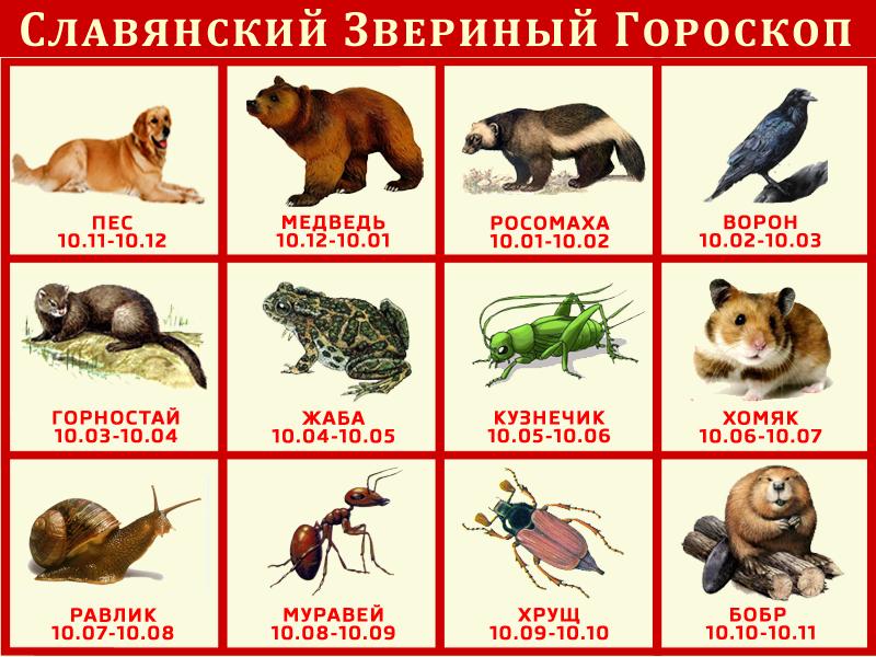 Славянский гороскоп животных по месяцу рождения