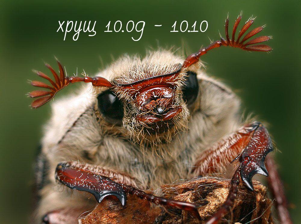 Славянский гороскоп животных по месяцам
