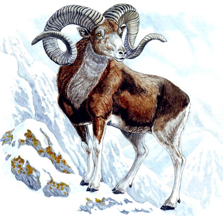 гороскоп на январь овен