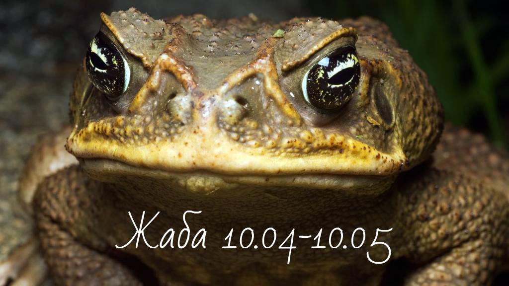 Славянский гороскоп животных по месяцам - жаба