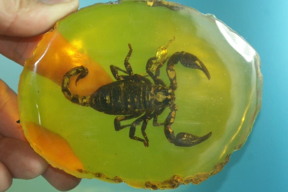 янтарь со скорпионом