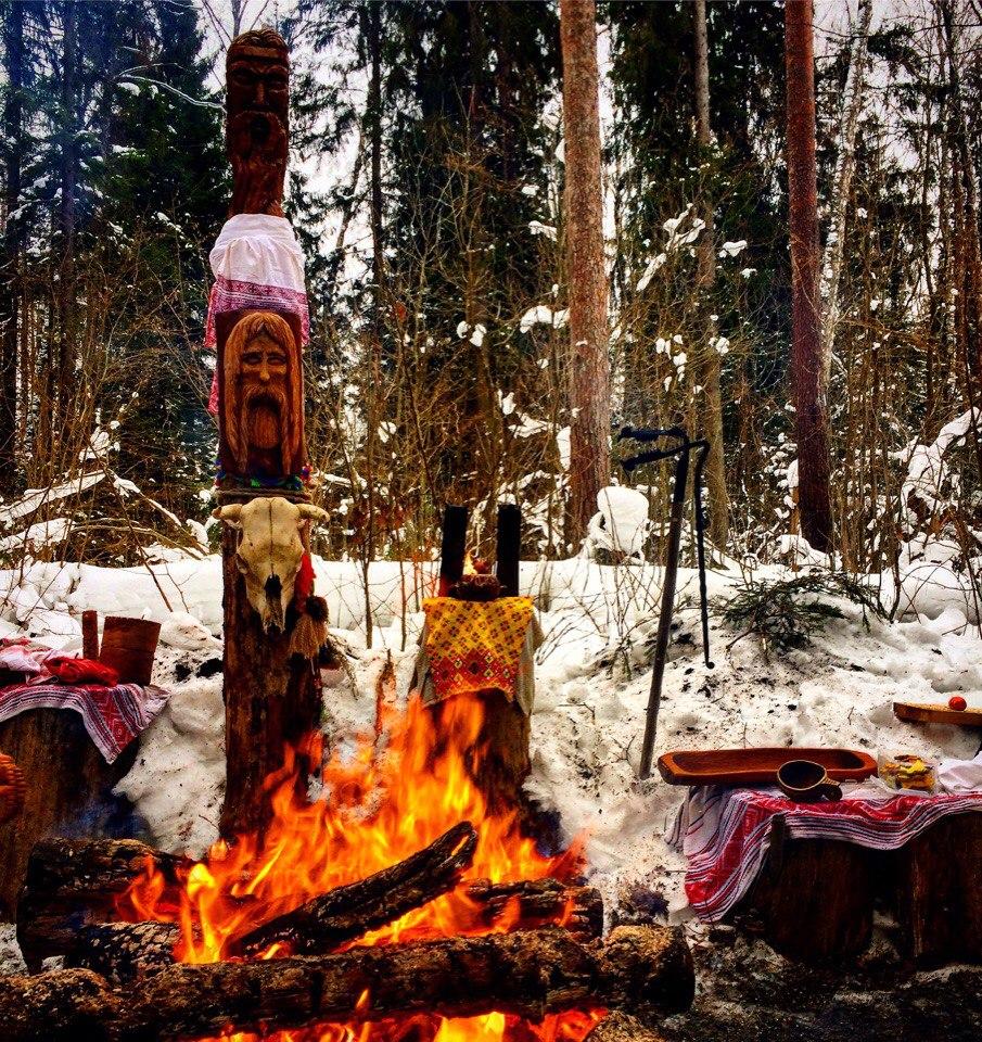 Велес зимний - треба
