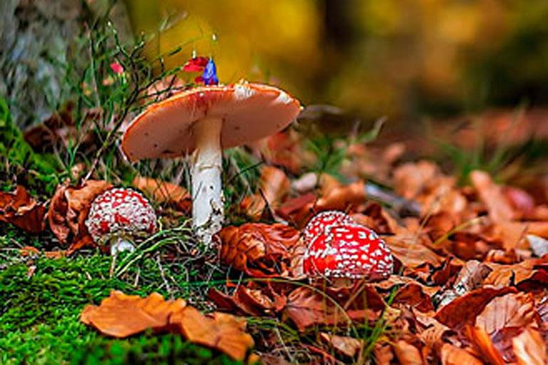 7 сентября, народные приметы и традиции на Тит листопадник – 37