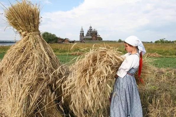 8 сентября в народном календаре овсяница