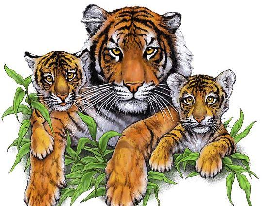 2022 год по восточному календарю – год водяного тигра.